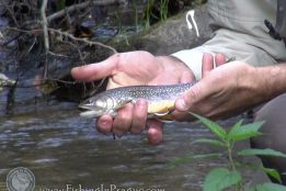Fly fishing in czech Colorado