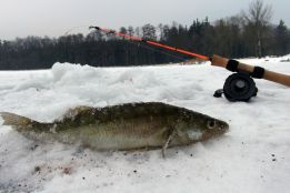 Ice fishing for perch and walleye