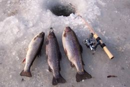 Icefishing (November – March)