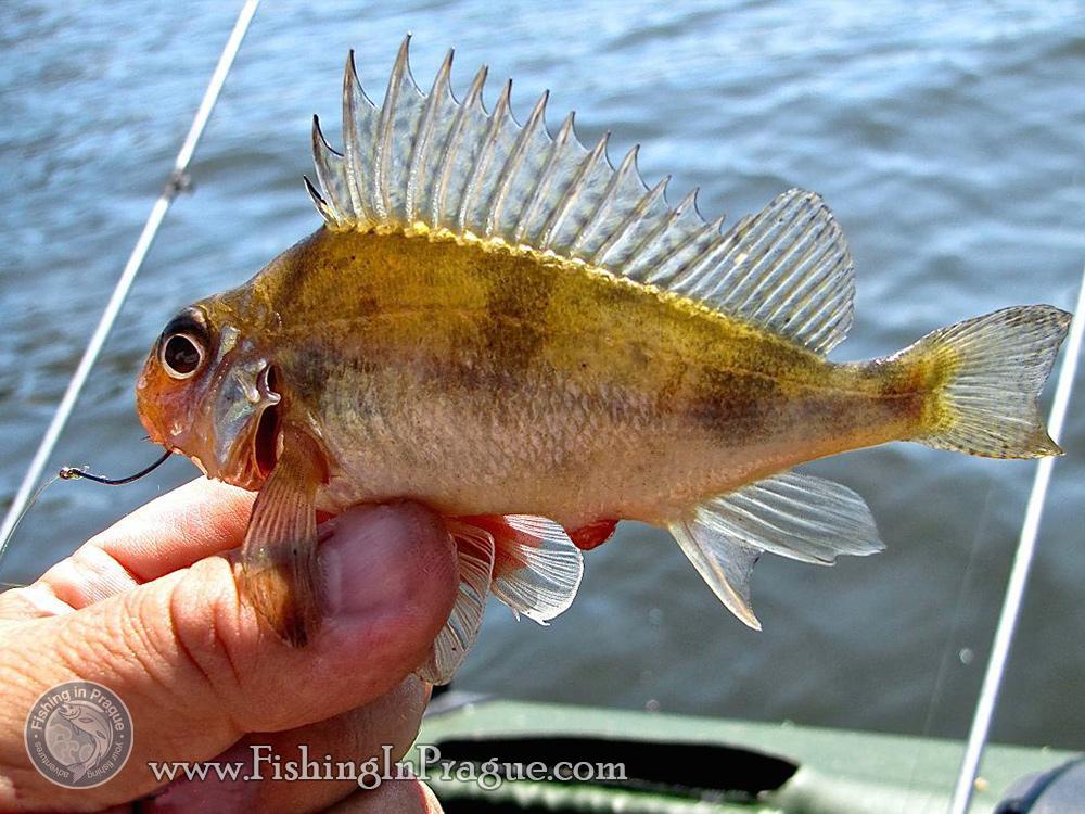 рыбалка на электронную приманку видео