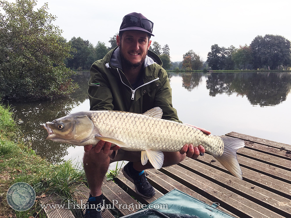 Stubborn grass carp from surface