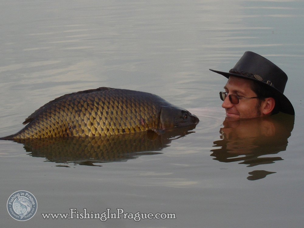 Photos with big carps are well-done in the water