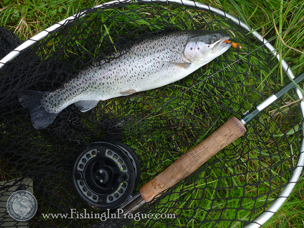 Lake fly fishing - rainbow trout