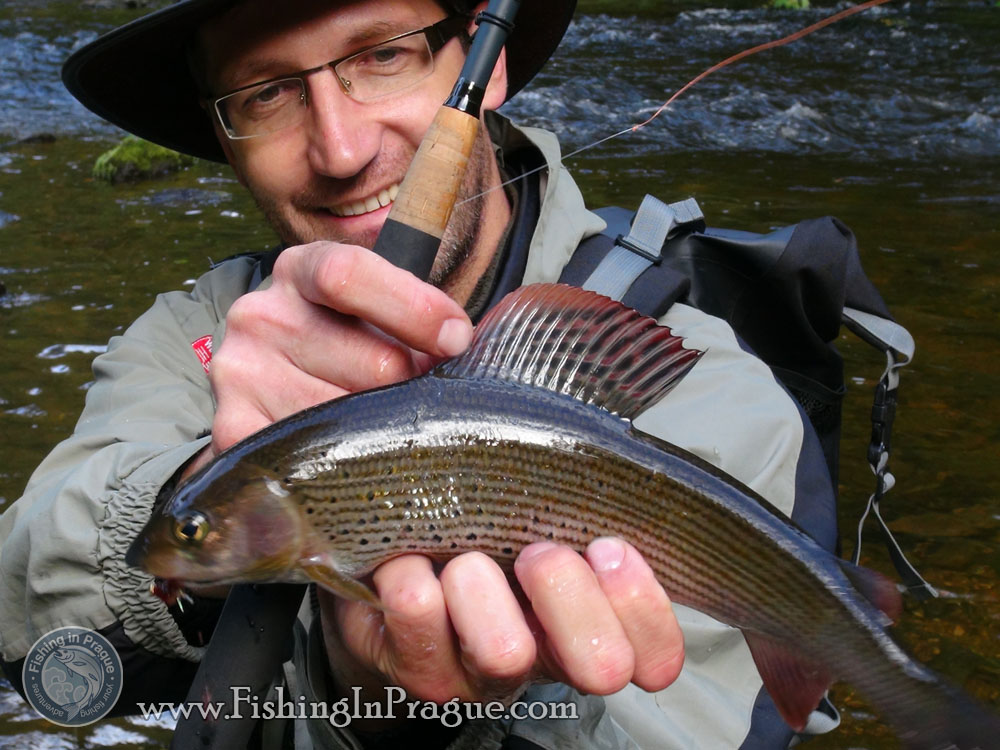 Autumn fly fishing for grayling