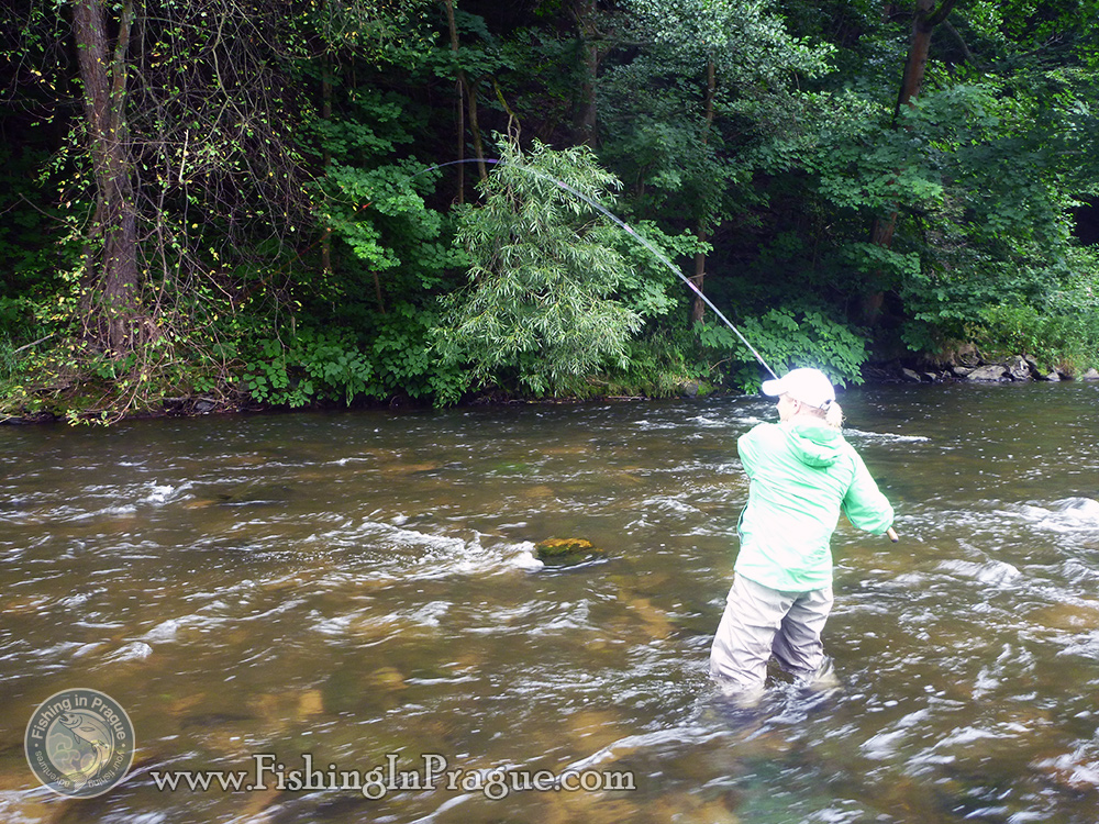 Fighting with big trout in the current