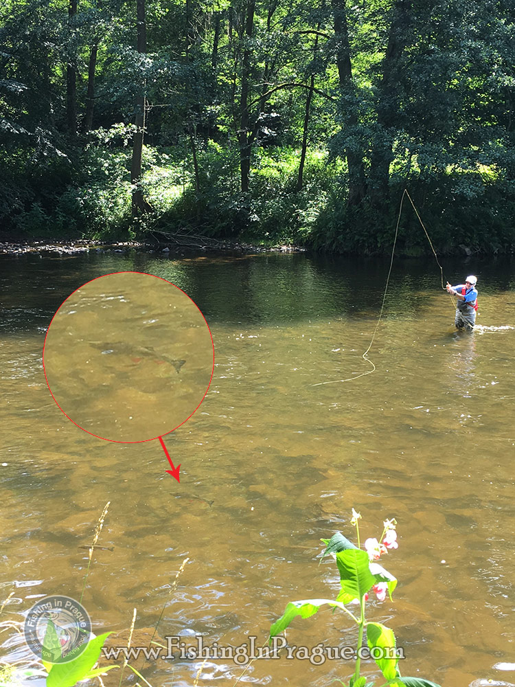 Fly fishing for coarse fish isn't always easy