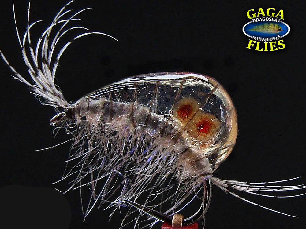 Gammarus by GAGA flies