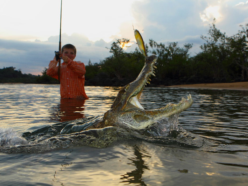 Cayman fishing on Rio Xingu