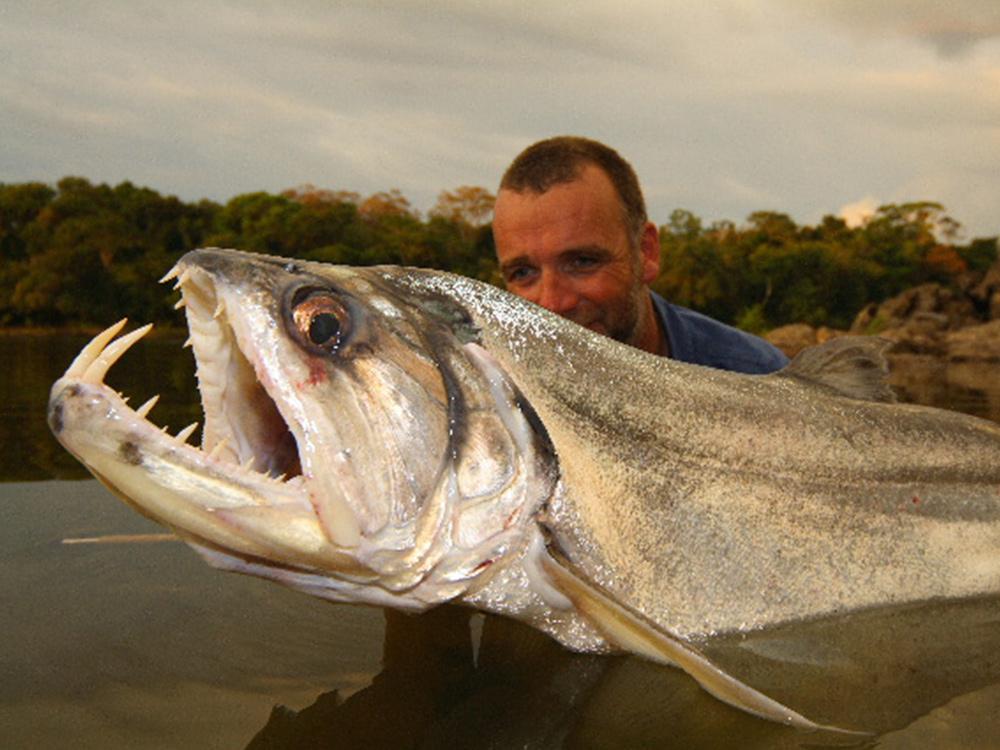 Payara or Vampire Fish from Amazon