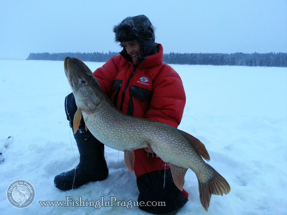110 cm and 16 kg pike